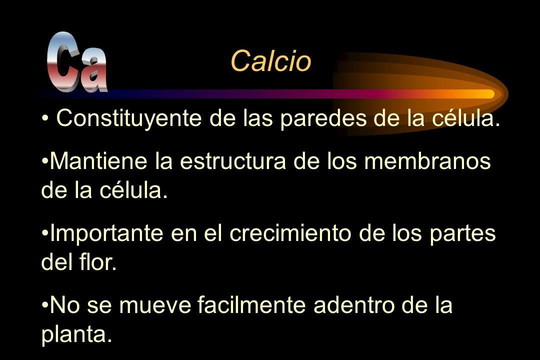Calcio Ca Constituyente de las paredes de la célula.