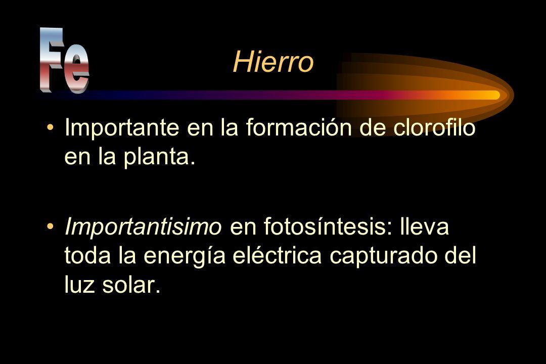 Hierro Fe Importante en la formación de clorofilo en la planta.