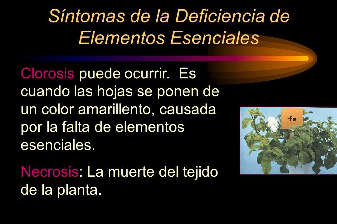 Síntomas de la Deficiencia de Elementos Esenciales