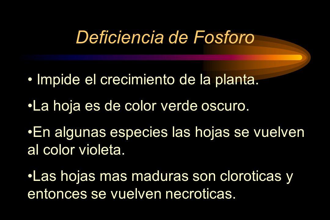 Deficiencia de Fosforo