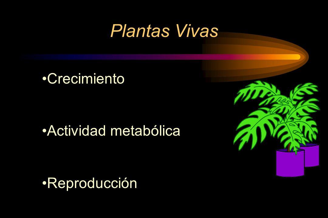 Plantas Vivas Crecimiento Actividad metabólica Reproducción