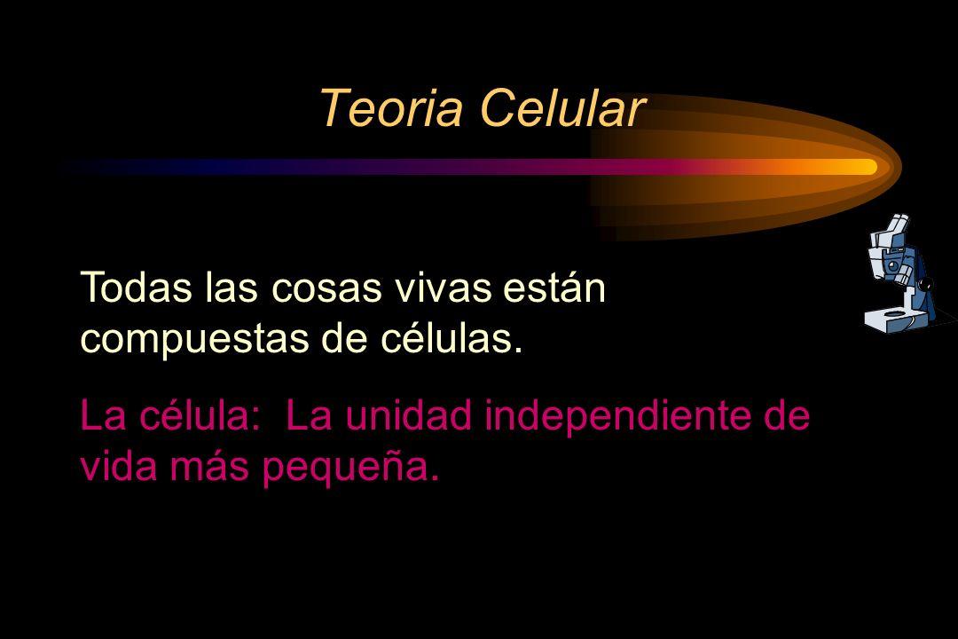 Teoria Celular Todas las cosas vivas están compuestas de células.