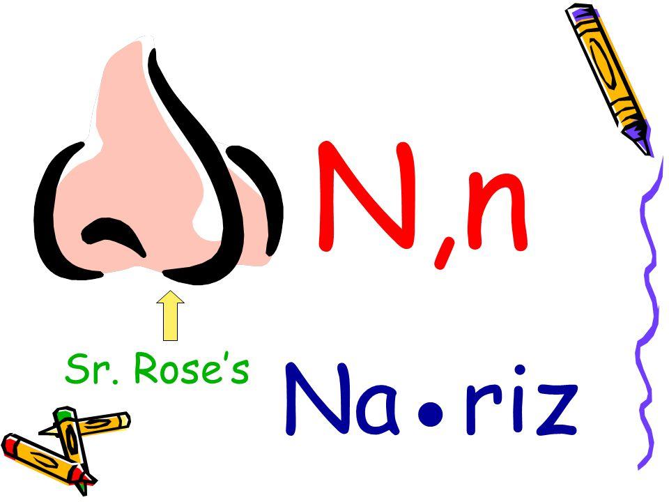 N,n Sr. Rose's Na●riz