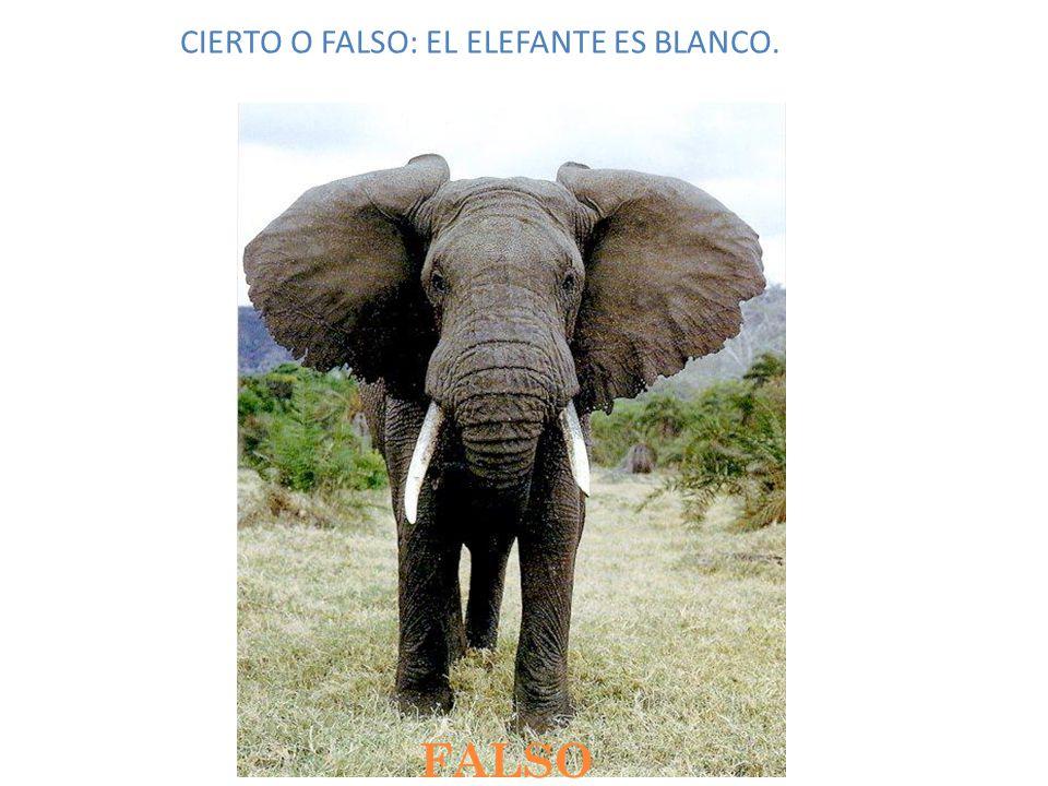 CIERTO O FALSO: EL ELEFANTE ES BLANCO.