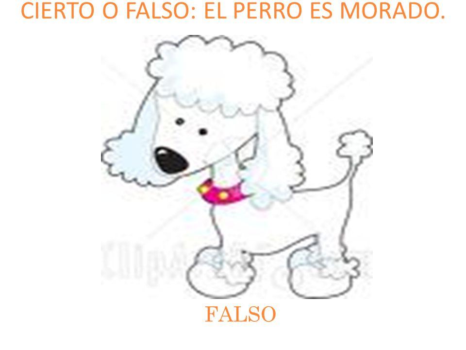 CIERTO O FALSO: EL PERRO ES MORADO.