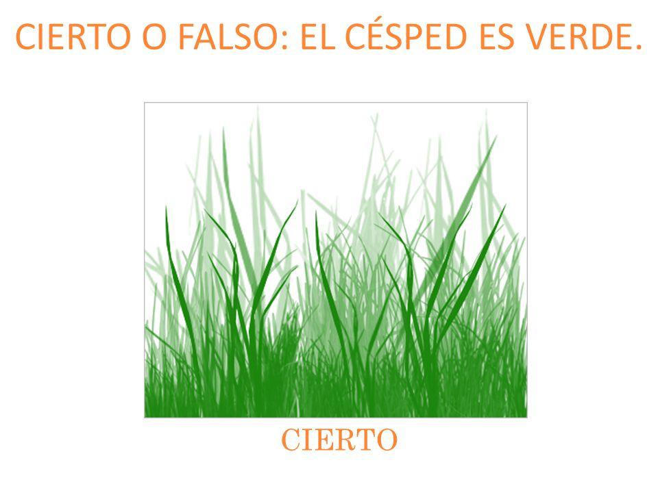 CIERTO O FALSO: EL CÉSPED ES VERDE.
