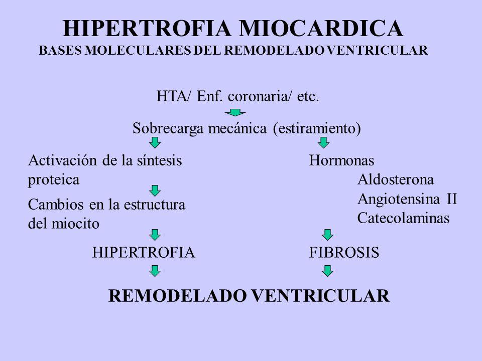 HIPERTROFIA MIOCARDICA BASES MOLECULARES DEL REMODELADO VENTRICULAR