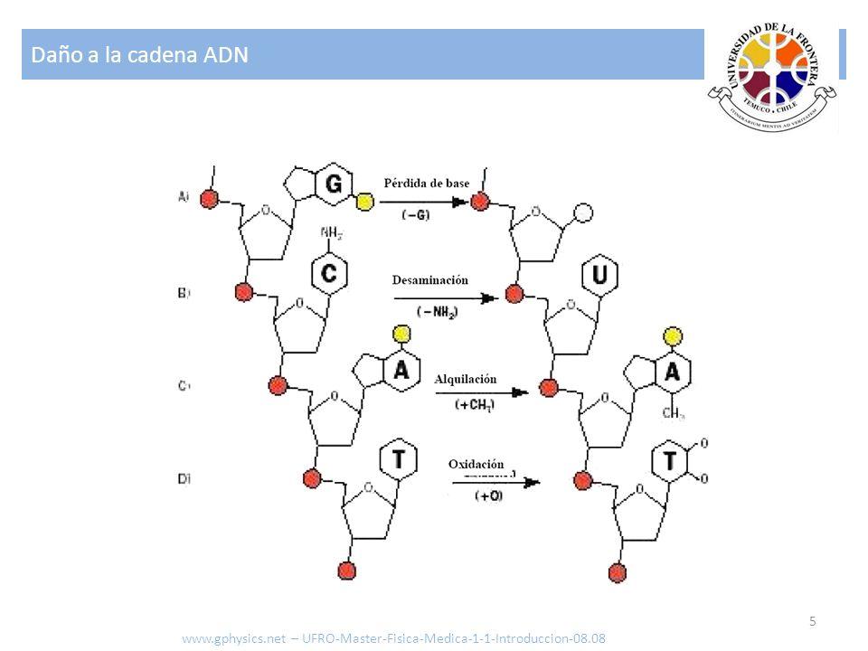 Daño a la cadena ADN www.gphysics.net – UFRO-Master-Fisica-Medica-1-1-Introduccion-08.08
