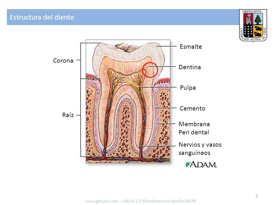 Estructura del diente Esmalte Corona Dentina Pulpa Cemento Raíz