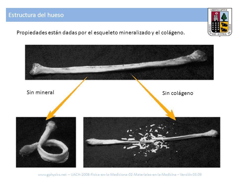 Estructura del hueso Propiedades están dadas por el esqueleto mineralizado y el colágeno. Sin mineral.