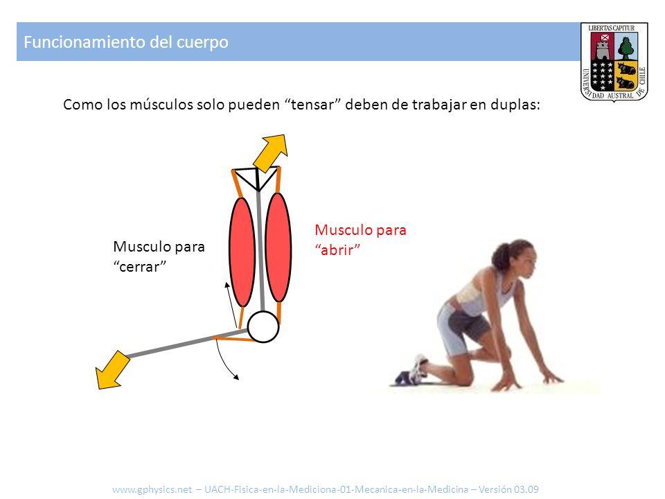 Funcionamiento del cuerpo