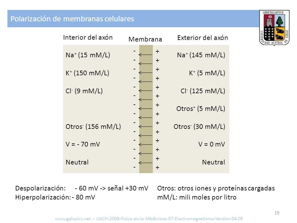 Polarización de membranas celulares