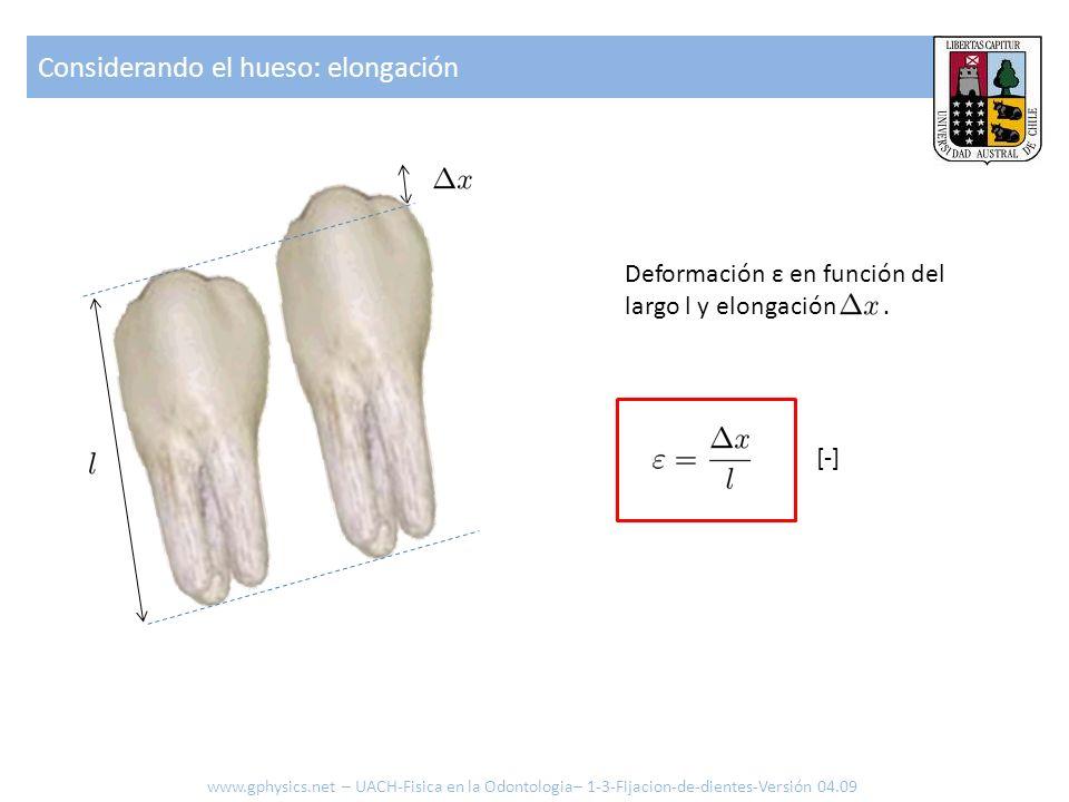 Considerando el hueso: elongación