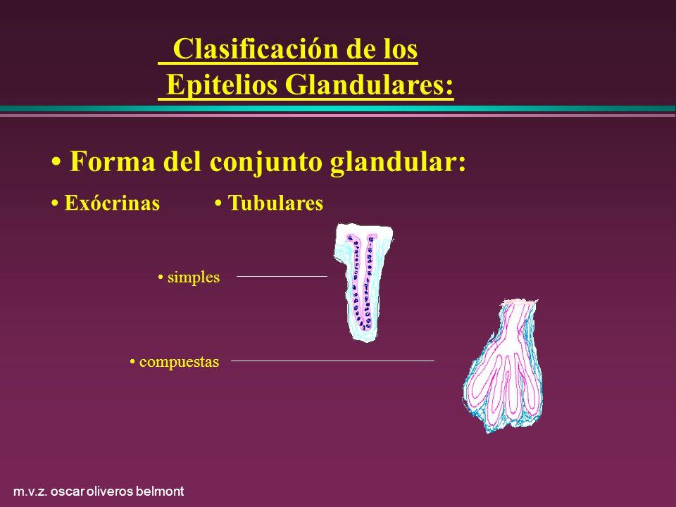 Epitelios Glandulares: