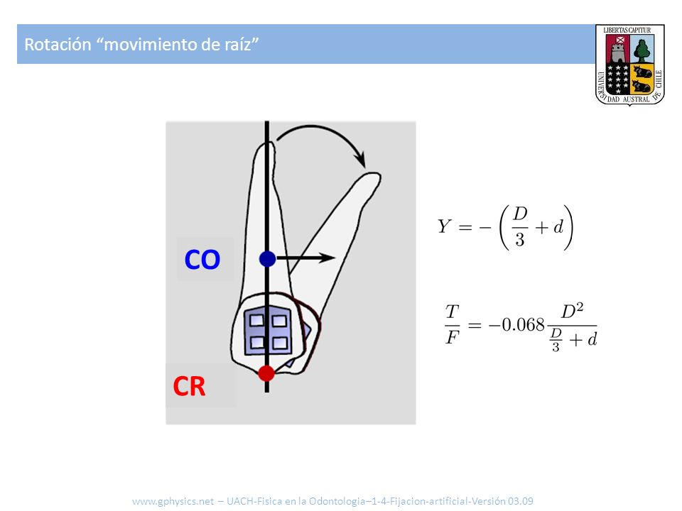 CO CR Rotación movimiento de raíz