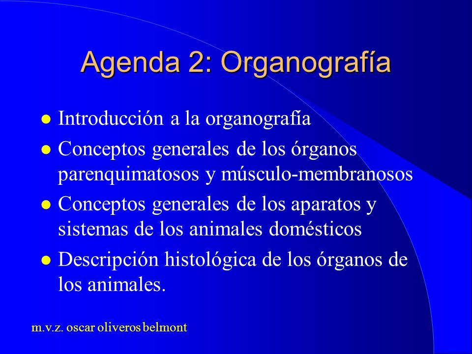 Agenda 2: Organografía Introducción a la organografía