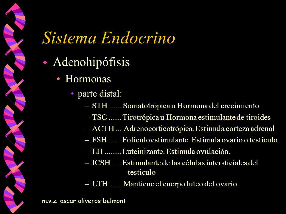 Sistema Endocrino Adenohipófisis Hormonas parte distal: