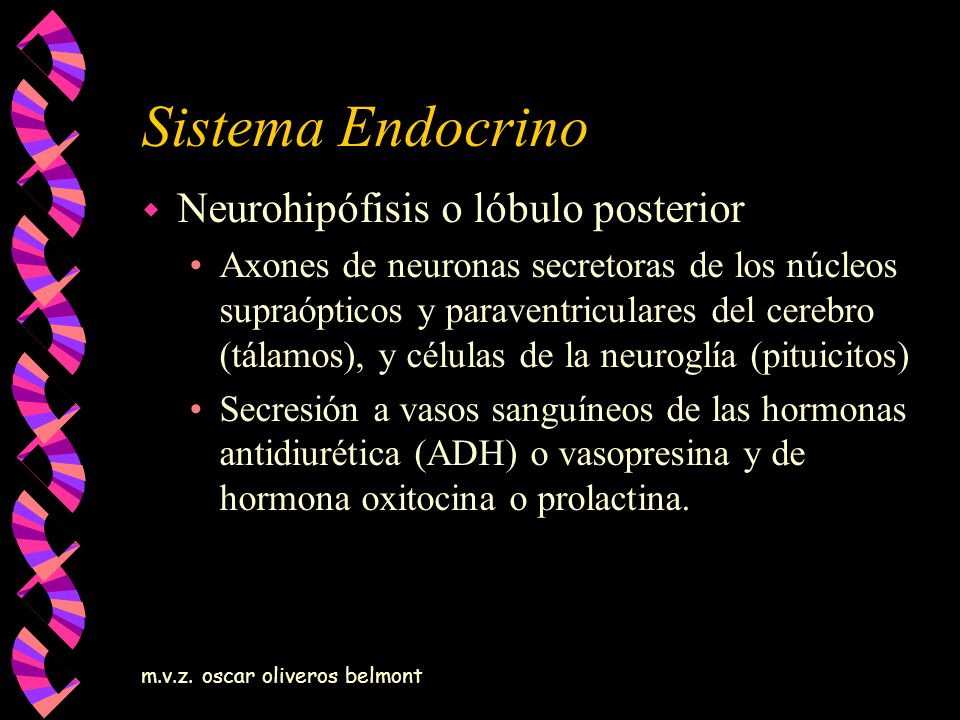 Sistema Endocrino Neurohipófisis o lóbulo posterior