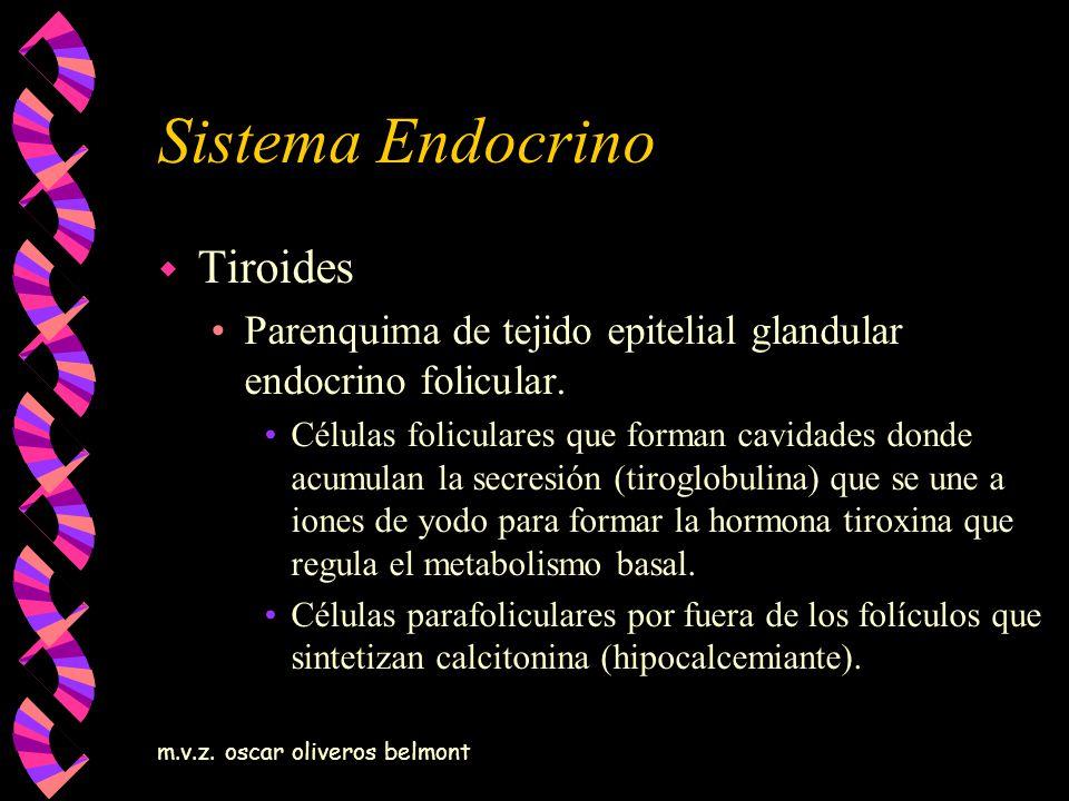 Sistema Endocrino Tiroides