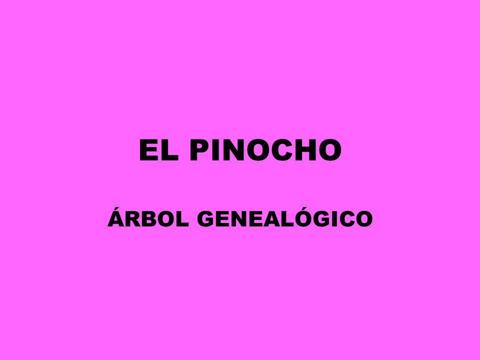 EL PINOCHO ÁRBOL GENEALÓGICO