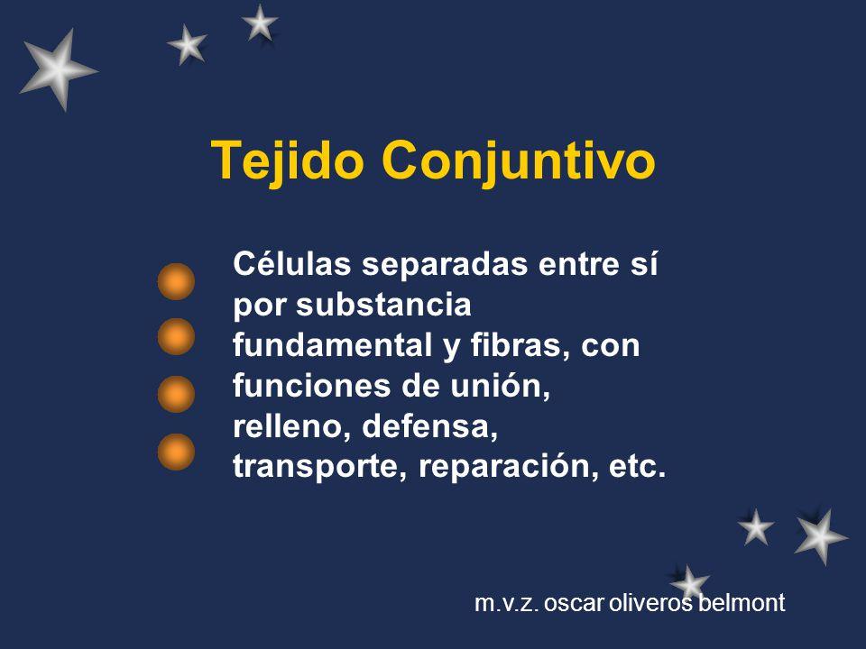 Tejido Conjuntivo