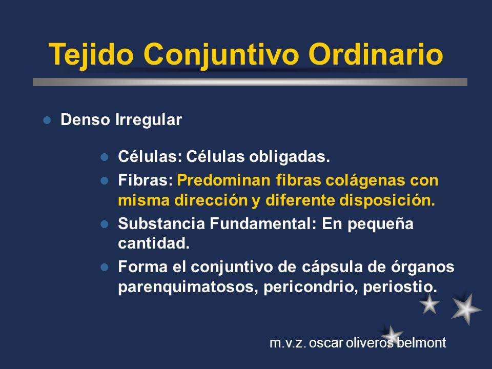 Tejido Conjuntivo Ordinario