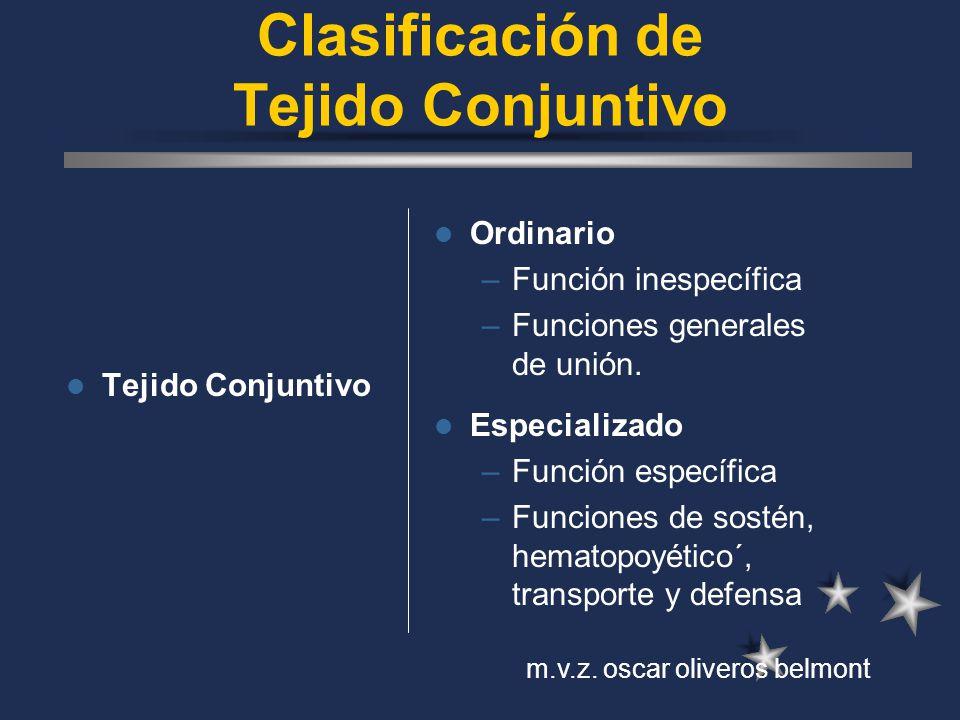Clasificación de Tejido Conjuntivo