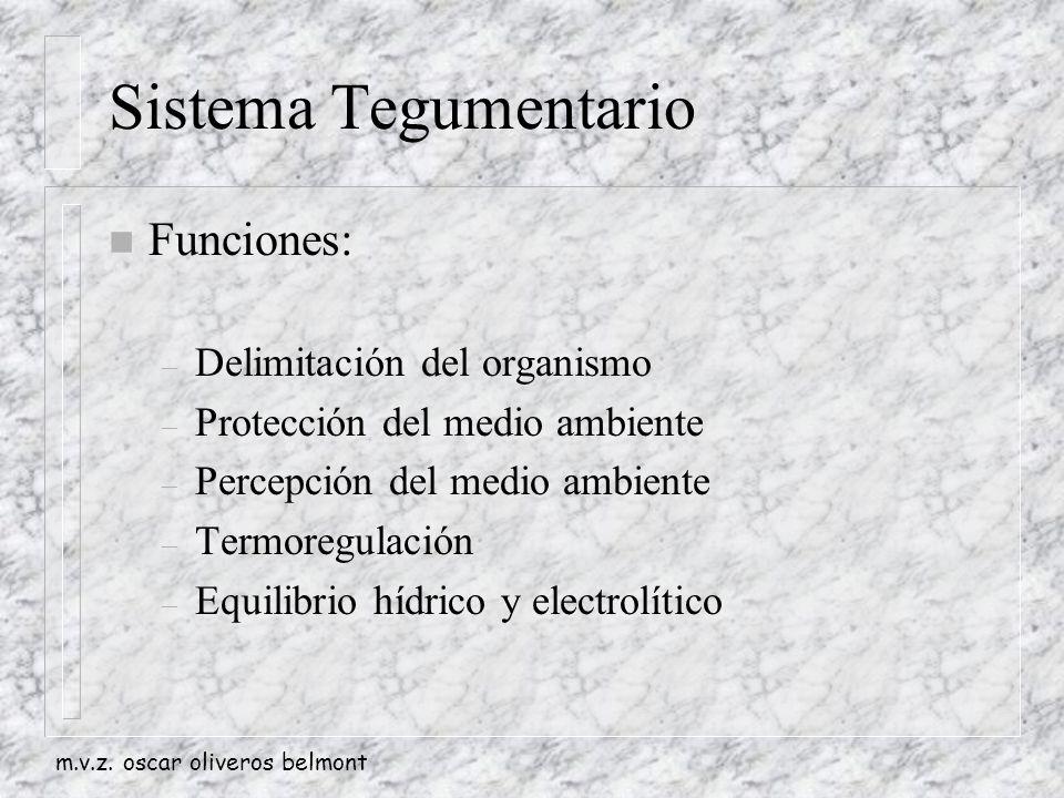 Sistema Tegumentario Funciones: Delimitación del organismo