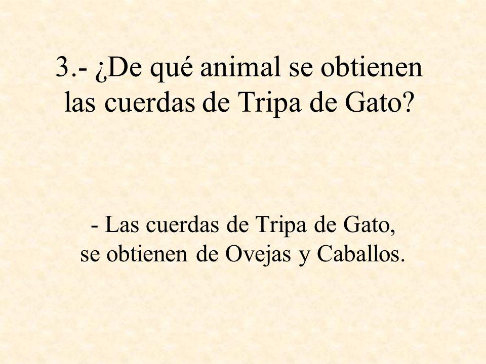 3.- ¿De qué animal se obtienen las cuerdas de Tripa de Gato