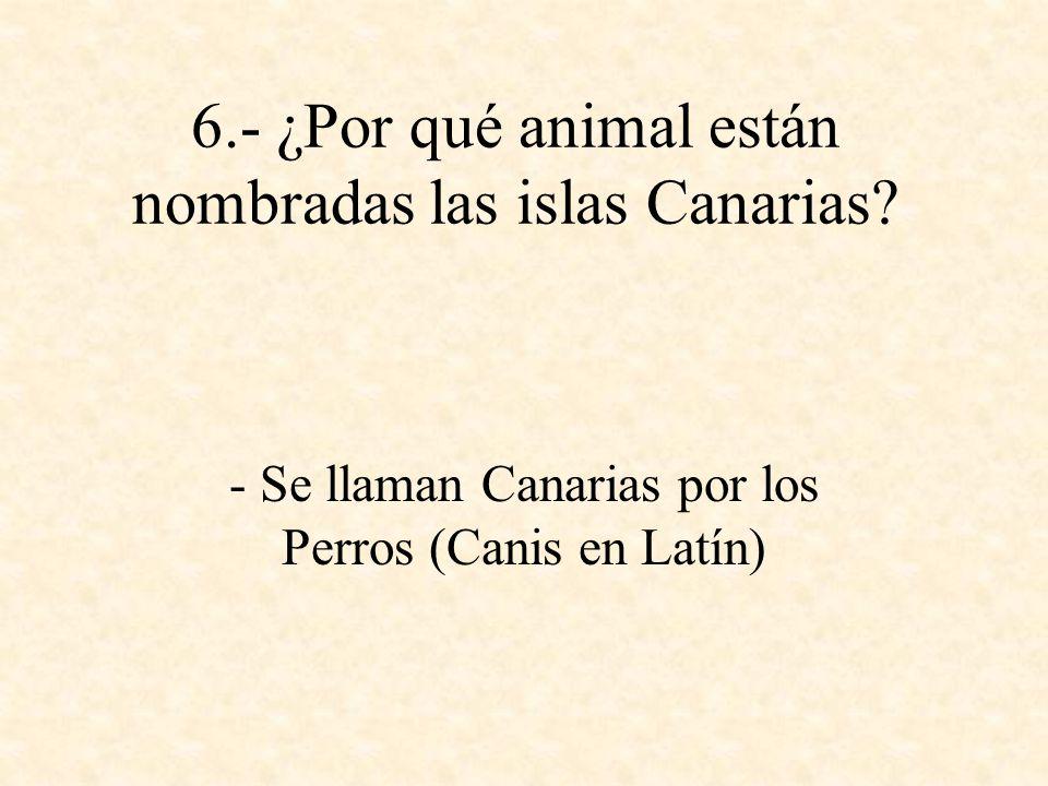 6.- ¿Por qué animal están nombradas las islas Canarias