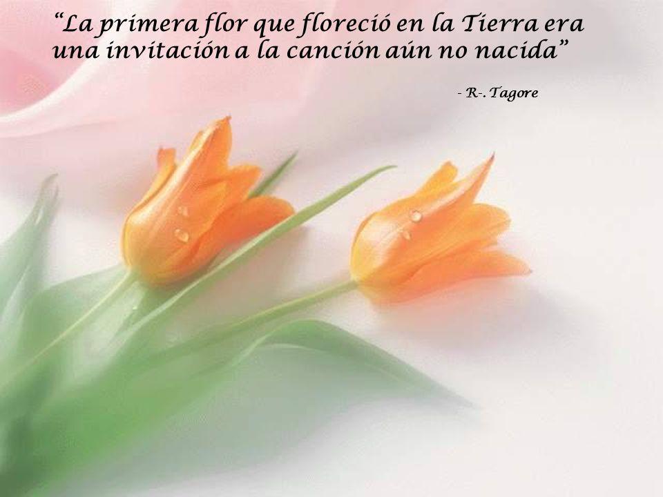 La primera flor que floreció en la Tierra era una invitación a la canción aún no nacida