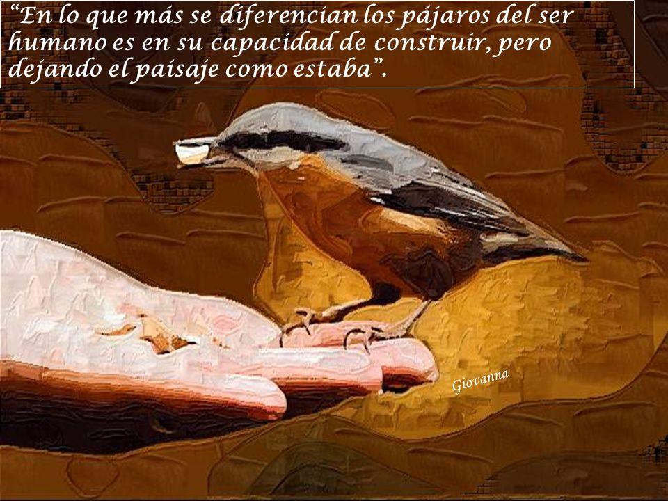 En lo que más se diferencian los pájaros del ser humano es en su capacidad de construir, pero dejando el paisaje como estaba .