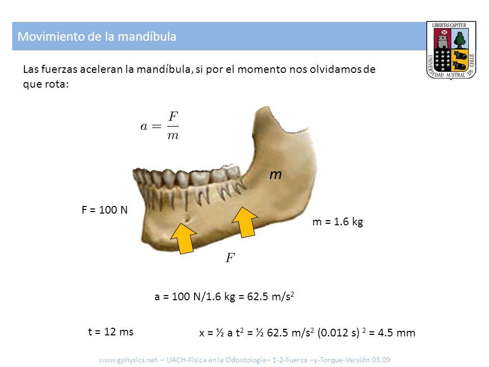 m Movimiento de la mandíbula