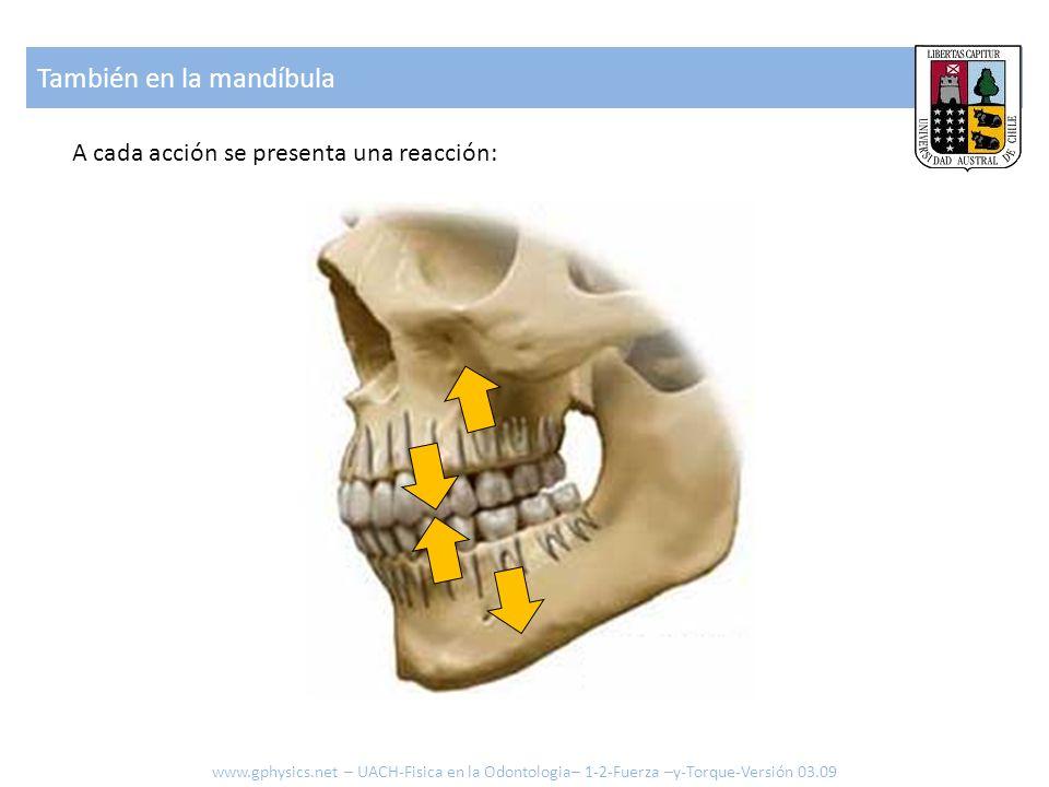 También en la mandíbula