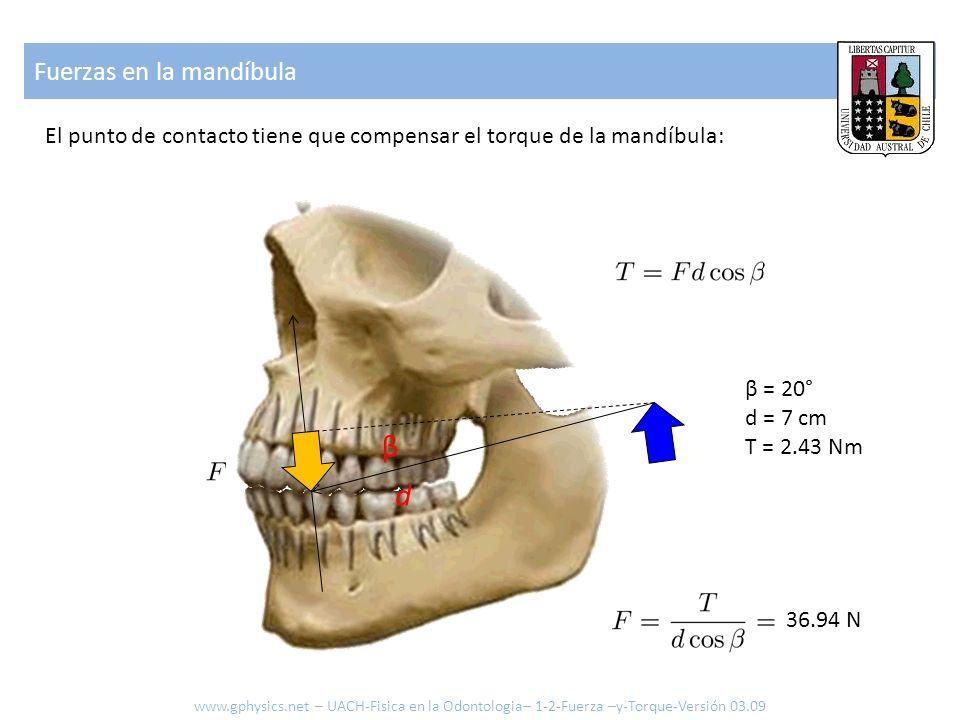 β d Fuerzas en la mandíbula