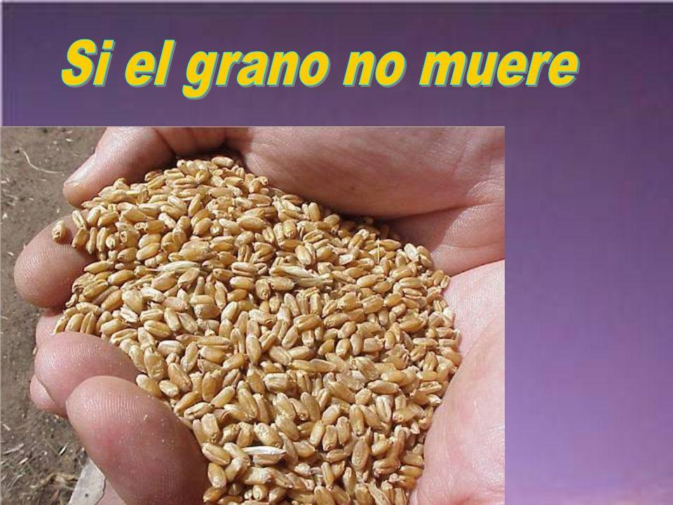 Si el grano no muere