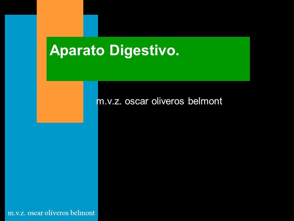 m.v.z. oscar oliveros belmont