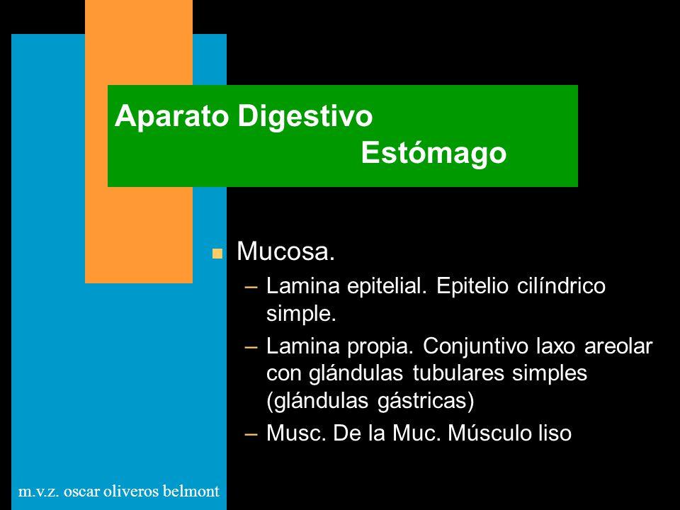 Aparato Digestivo Estómago