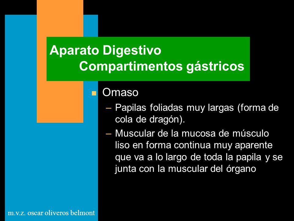 Aparato Digestivo Compartimentos gástricos