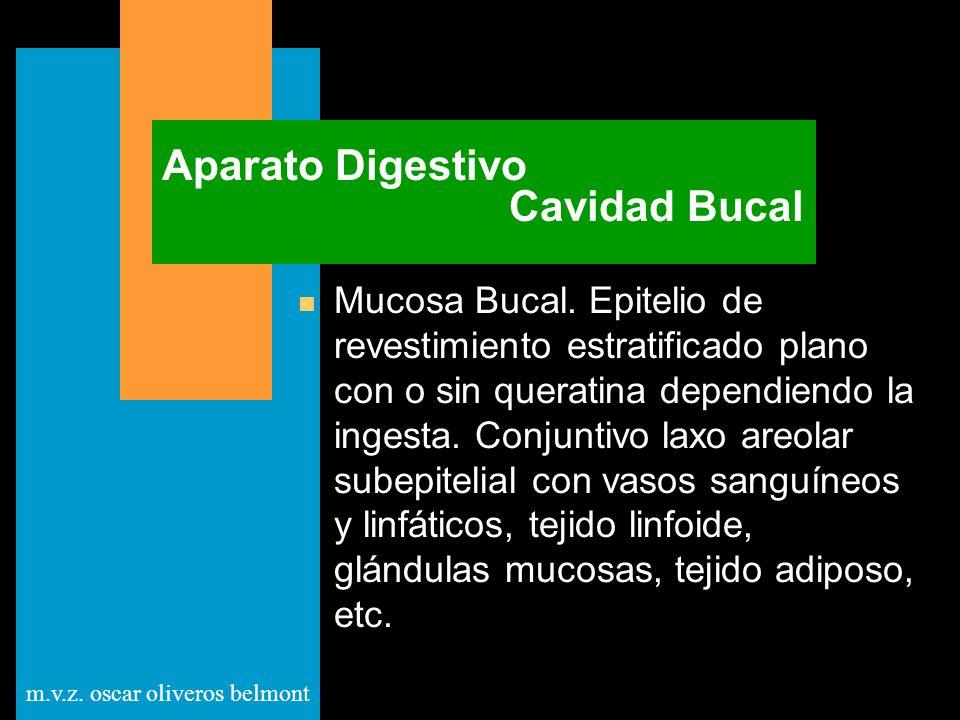 Aparato Digestivo Cavidad Bucal