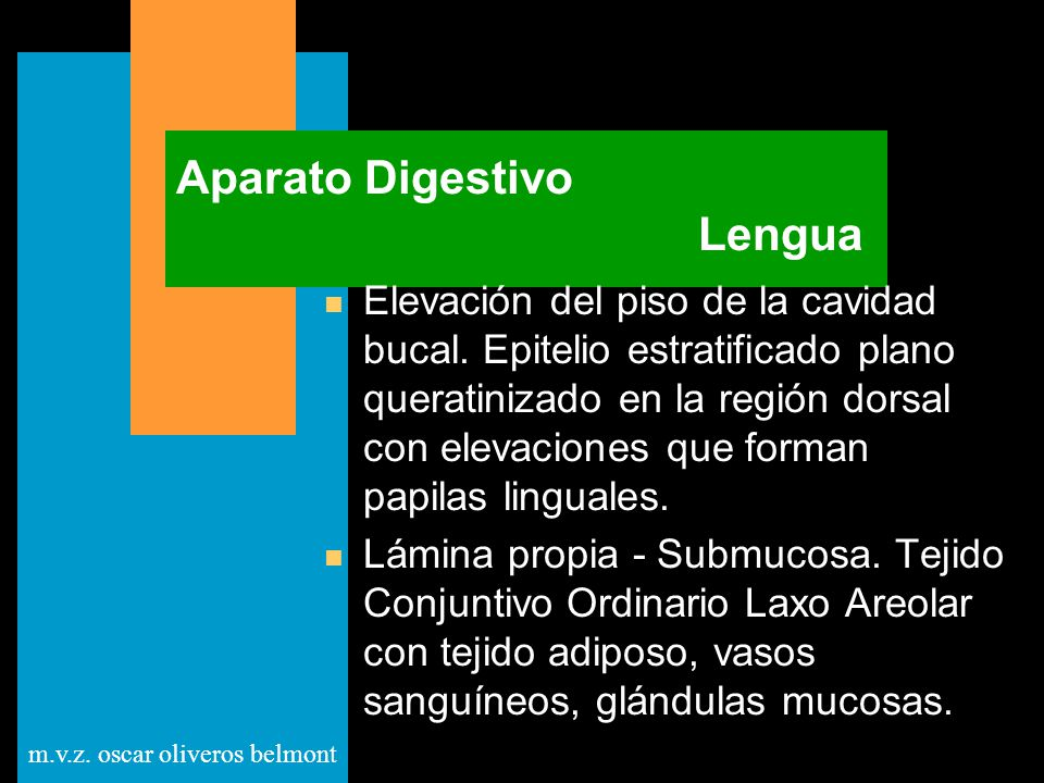 Aparato Digestivo Lengua