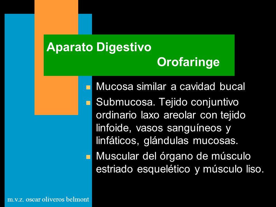 Aparato Digestivo Orofaringe