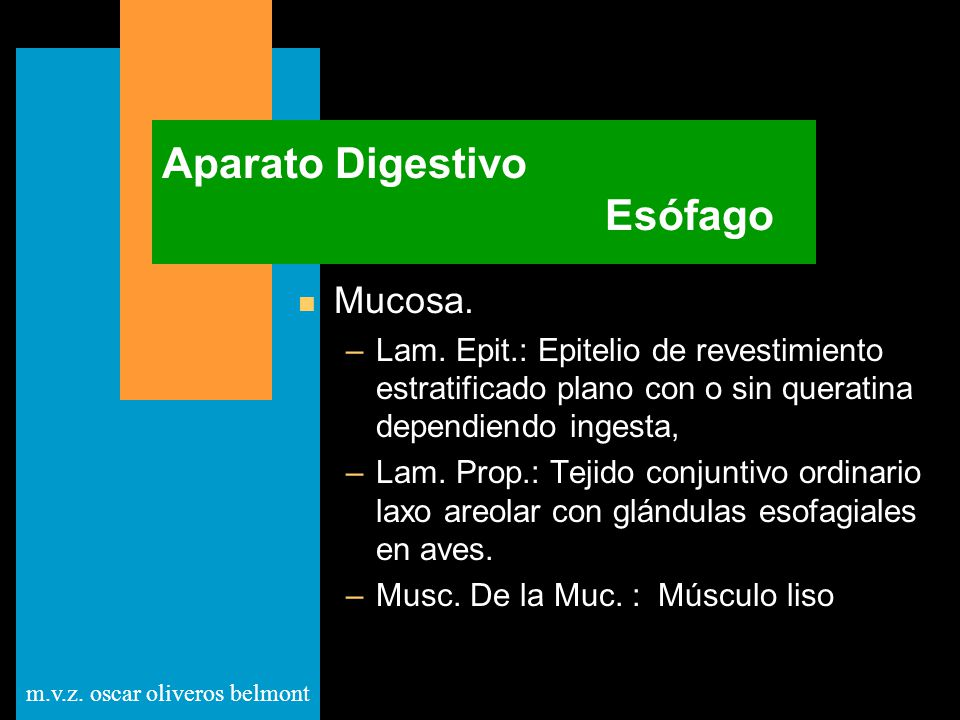 Aparato Digestivo Esófago