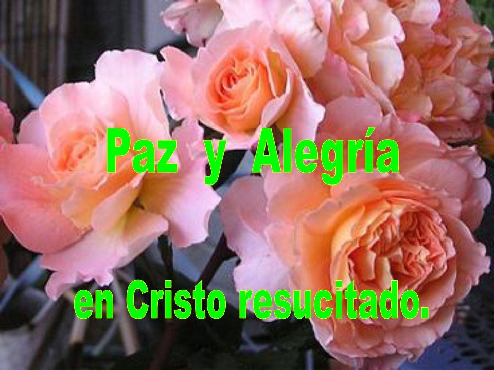Paz y Alegría en Cristo resucitado.