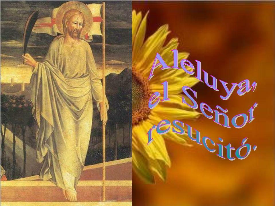 Aleluya, el Señor resucitó.