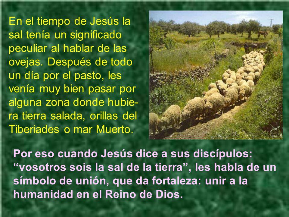 En el tiempo de Jesús la sal tenía un significado peculiar al hablar de las ovejas. Después de todo un día por el pasto, les venía muy bien pasar por alguna zona donde hubie-ra tierra salada, orillas del Tiberiades o mar Muerto.