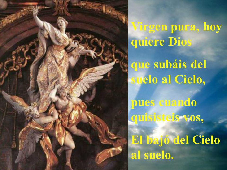 Virgen pura, hoy quiere Dios