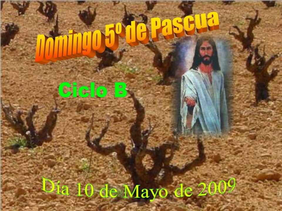 Domingo 5º de Pascua Ciclo B Día 10 de Mayo de 2009
