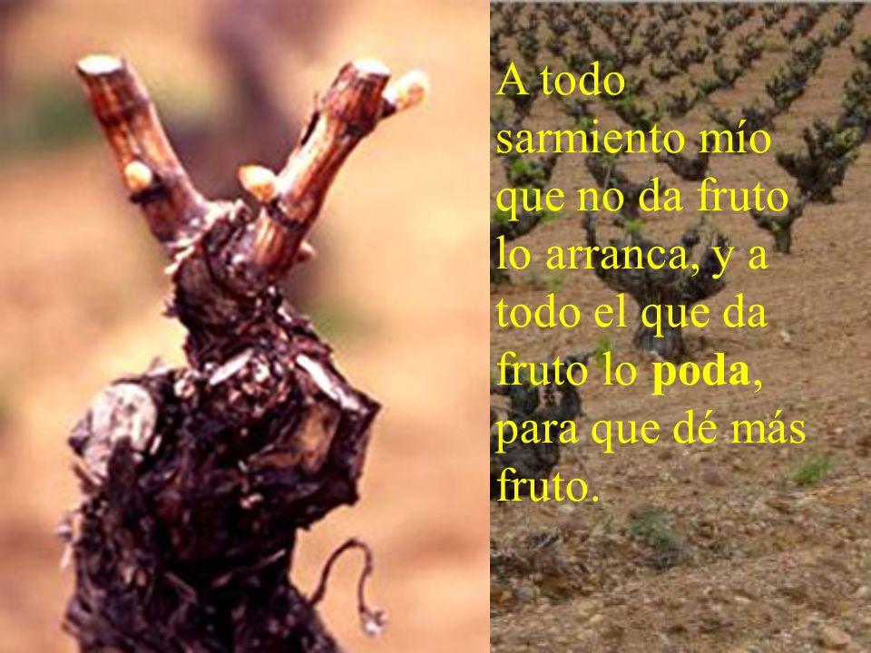 A todo sarmiento mío que no da fruto lo arranca, y a todo el que da fruto lo poda, para que dé más fruto.