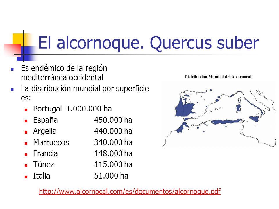 El alcornoque. Quercus suber